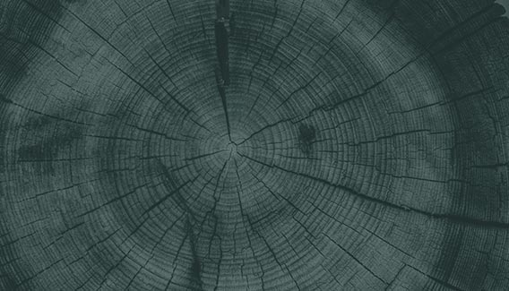 A cut view of a tree trunk, showing tree rings, with a dark green overlay on the image.