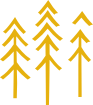 conifer trees icon