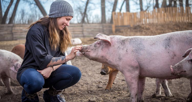 A chef smiles as she reaches to touch a pig's nose.