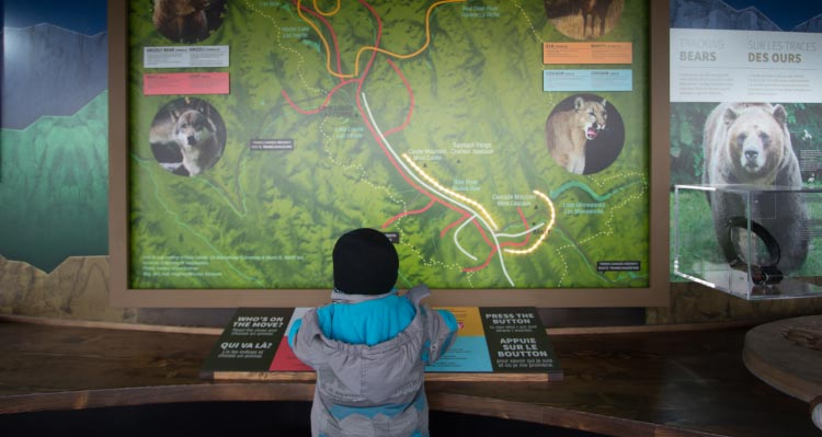 A child looks up at an interactive display about Canadian Rockies wildlife.