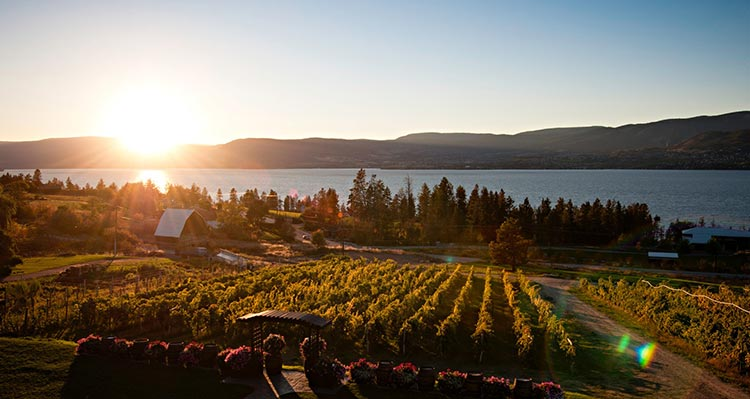 A vineyard overlooking a lake as the sun sets.