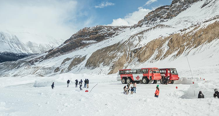 Groups of people on the Athabasca Glacier with Ice Explorer buses