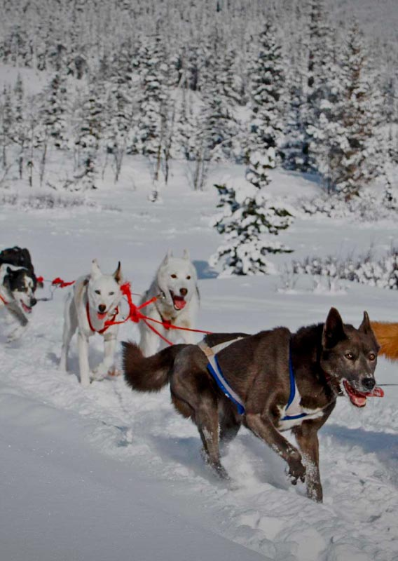 A group of dogs pull a sled across a open snowy field.