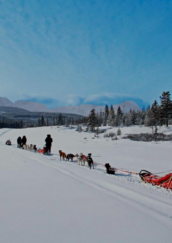 Sled dog groups move along a snowy field towards a blue sky and mountain vista